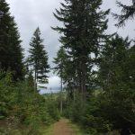 Image of woodland path